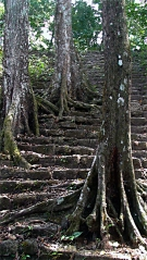 ancient-steps_6891644422_o